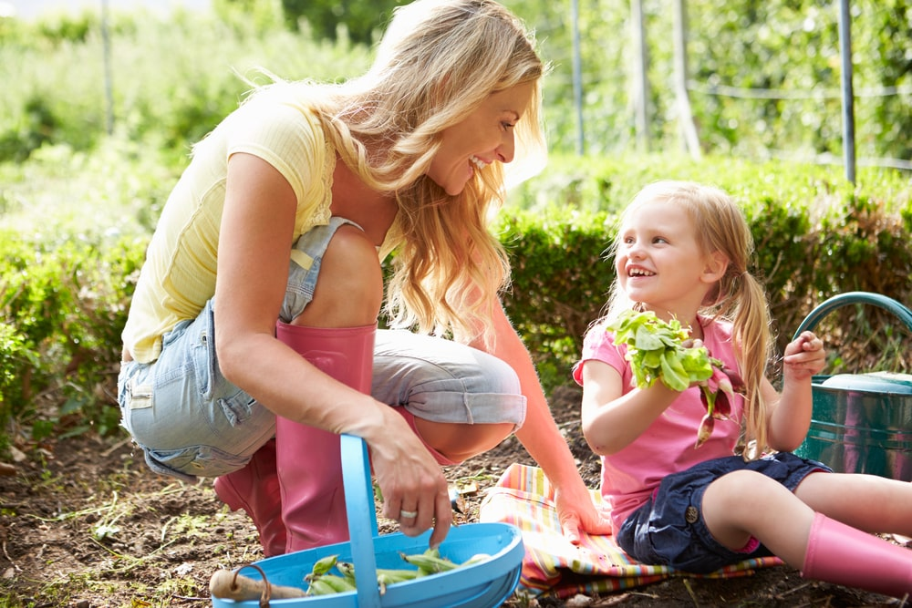 Get started with your school allotment
